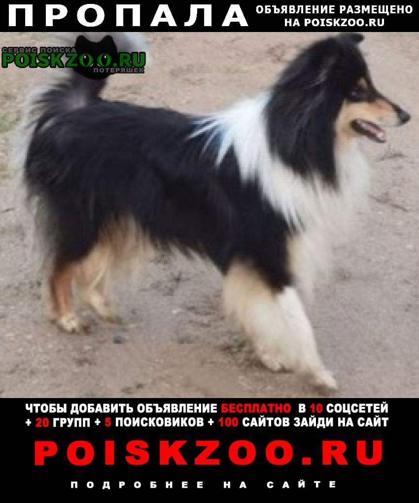 Пропала собака кобель Евпатория