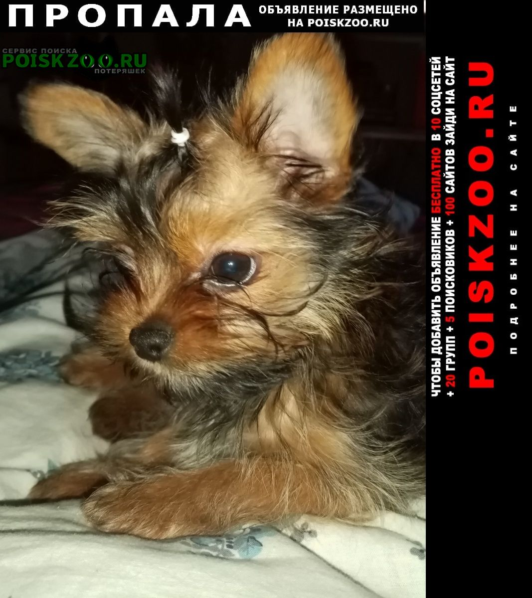 Пропала собака кобель щенок, 7 месяцев Санкт-Петербург