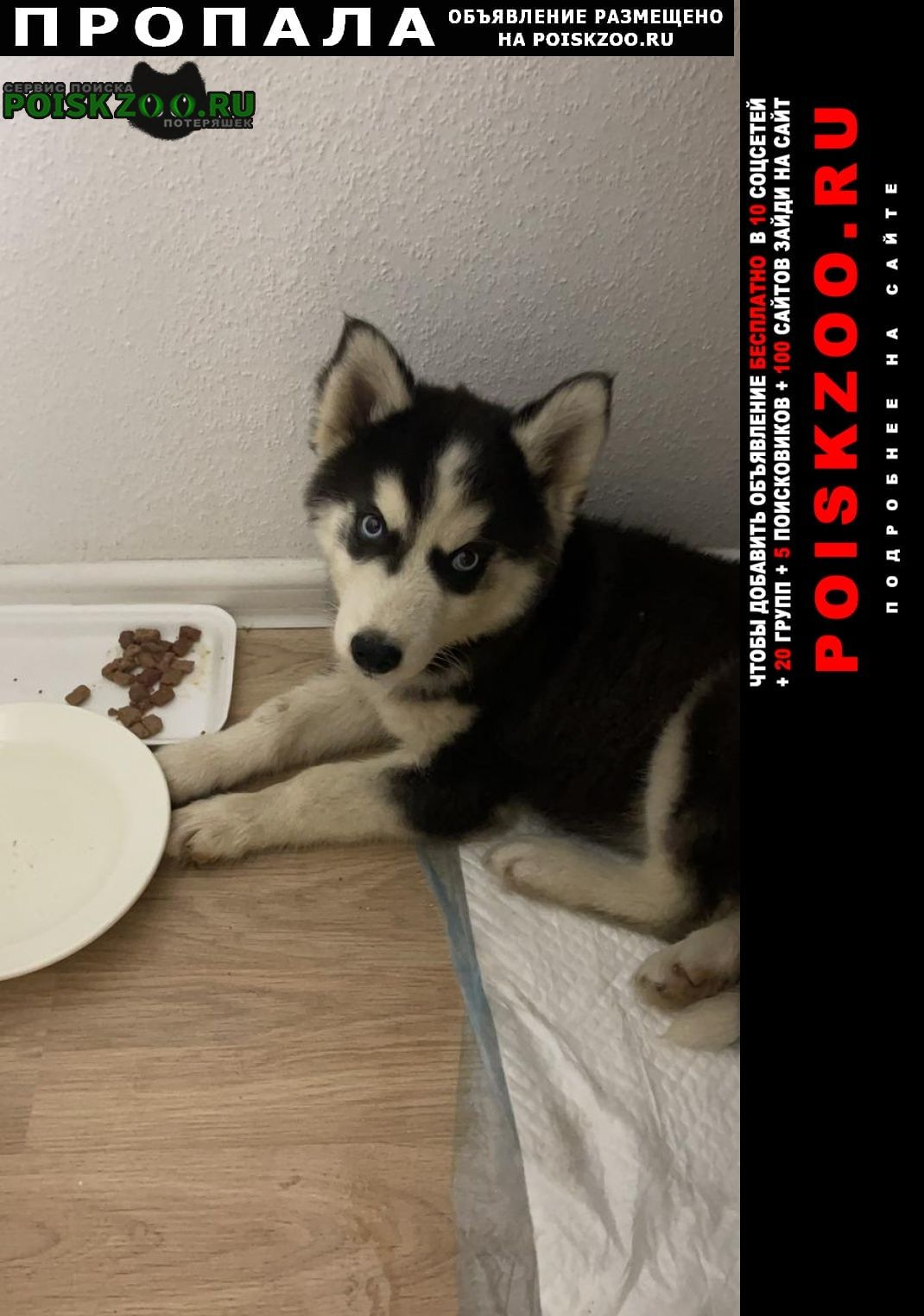 Пропала собака кобель щенок хаски черного окраса в текстильщ. Москва