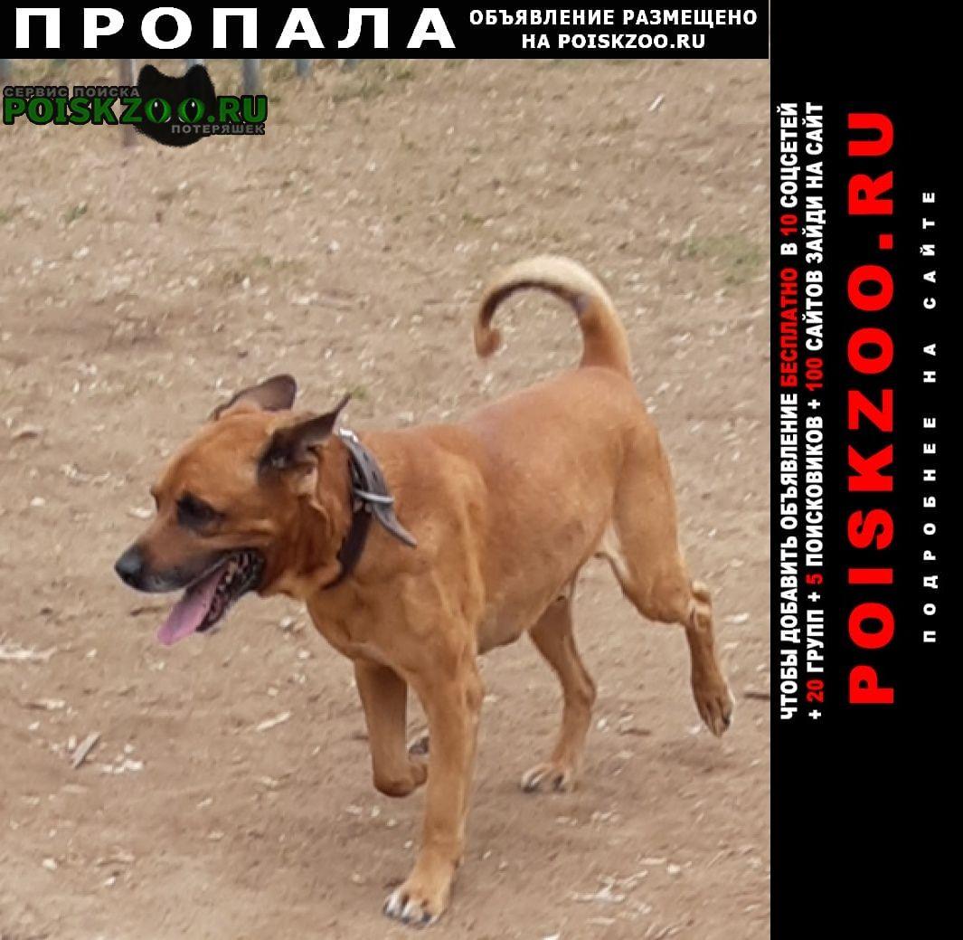 Пропала собака кобель Зарайск