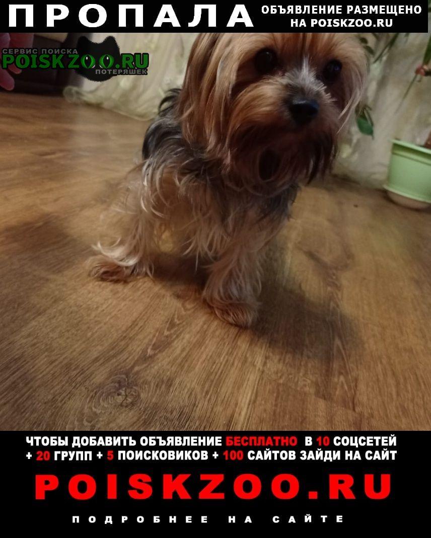 Пропала собака кобель йоркширский терьер Малоярославец