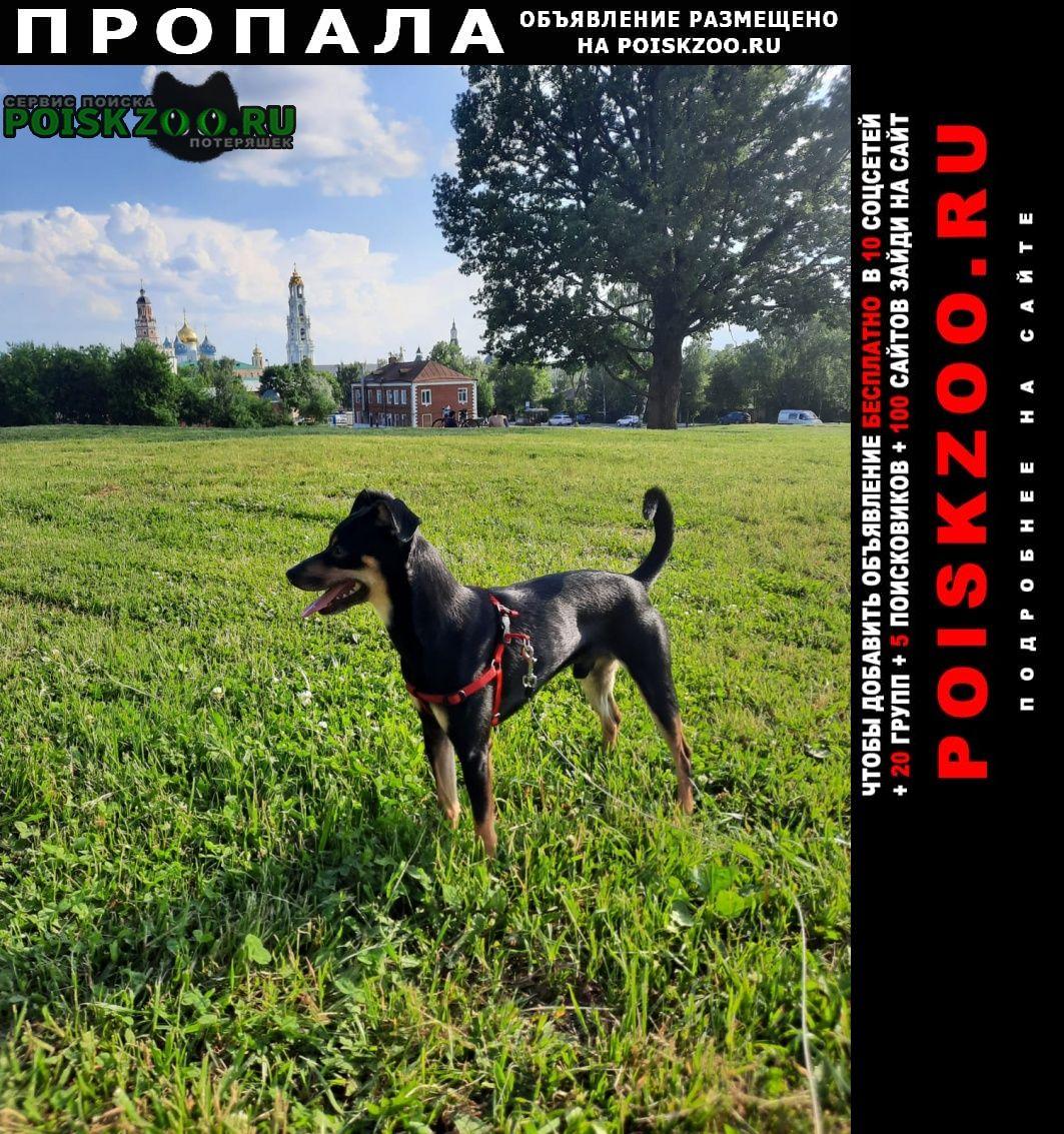 Пропала собака кобель русский той-терьер. кличка шкет. Москва