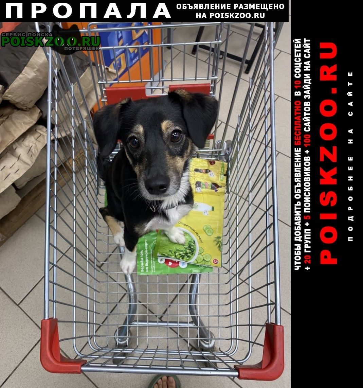 Пропала собака в районе поселка великий враг Кстово