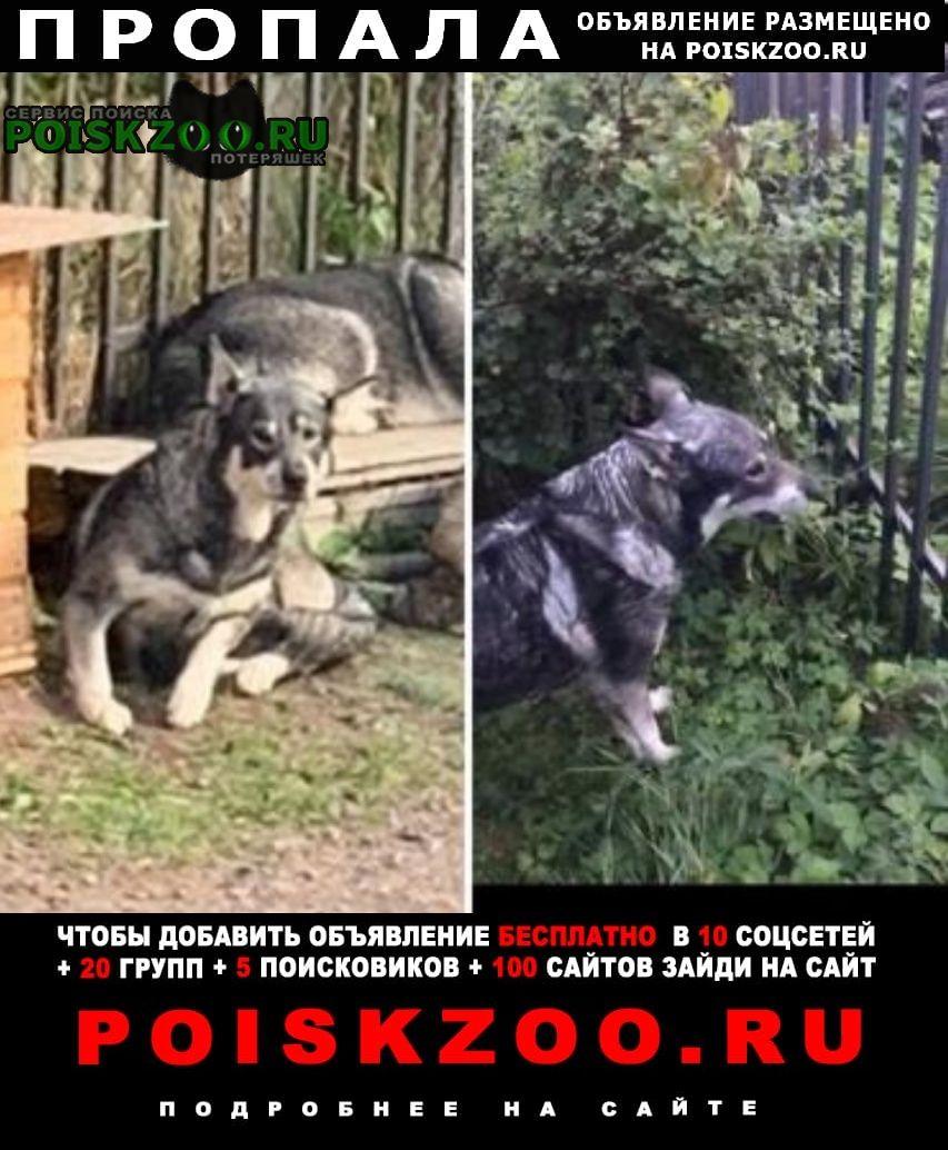 Пропала собака Санкт-Петербург