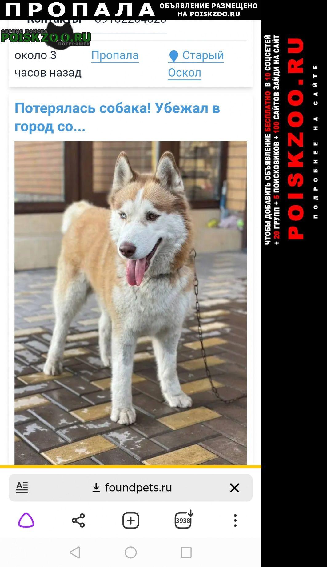 Пропала собака кобель помогите найти Старый Оскол