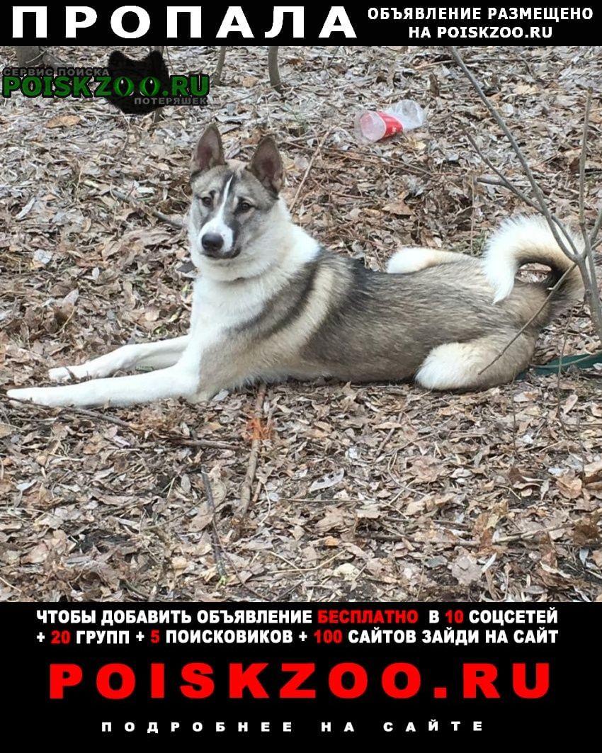 Пропала собака кобель Матвеев Курган