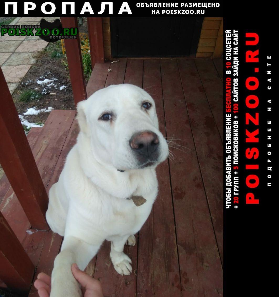 Пропала собака кобель алабай Красноярск