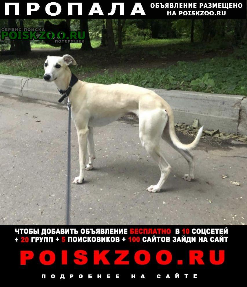 Пропала собака кобель уиппет аксель Москва