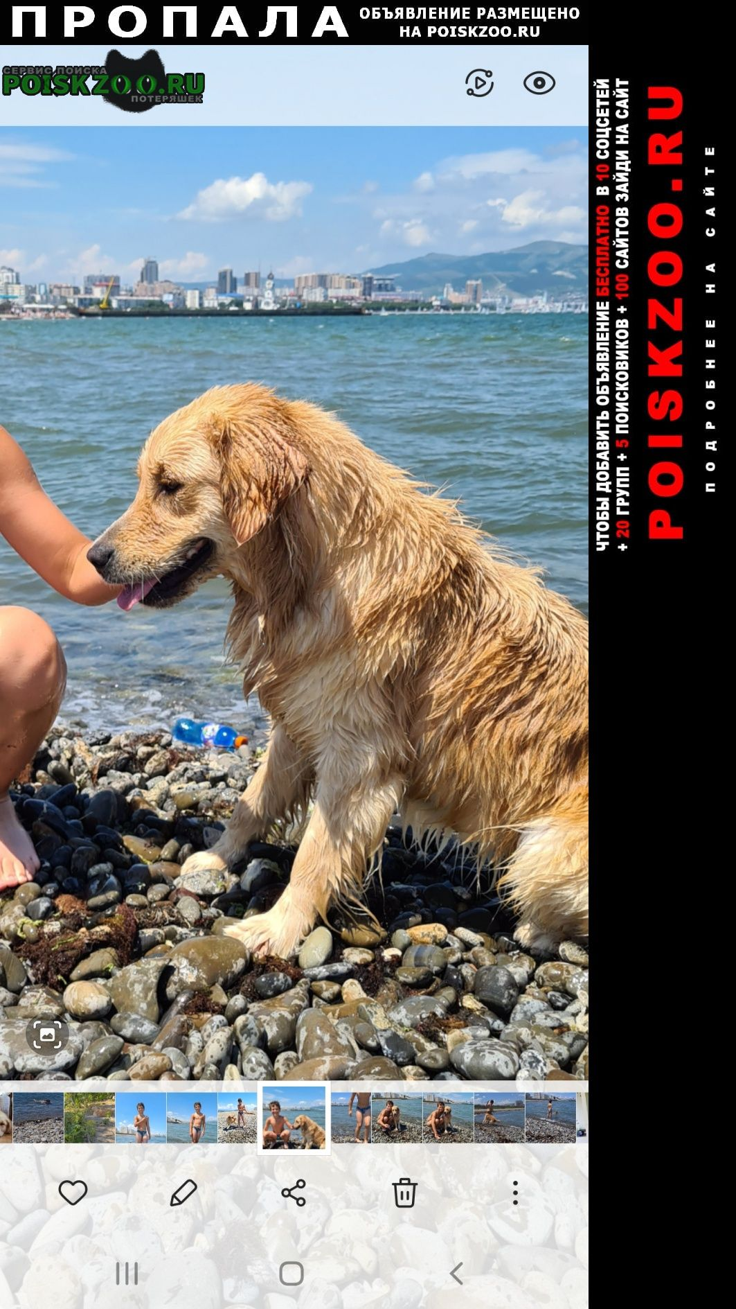 Пропала собака ретривер Новороссийск