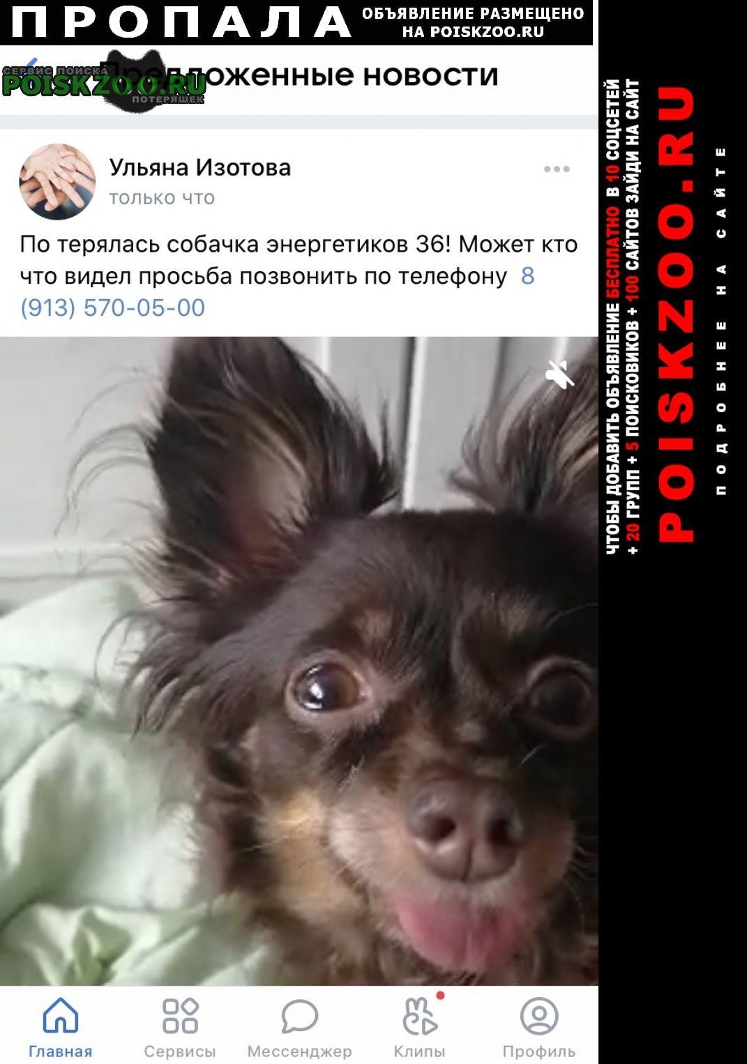 Пропала собака очень прошу вернуть за вознаграждение Красноярск
