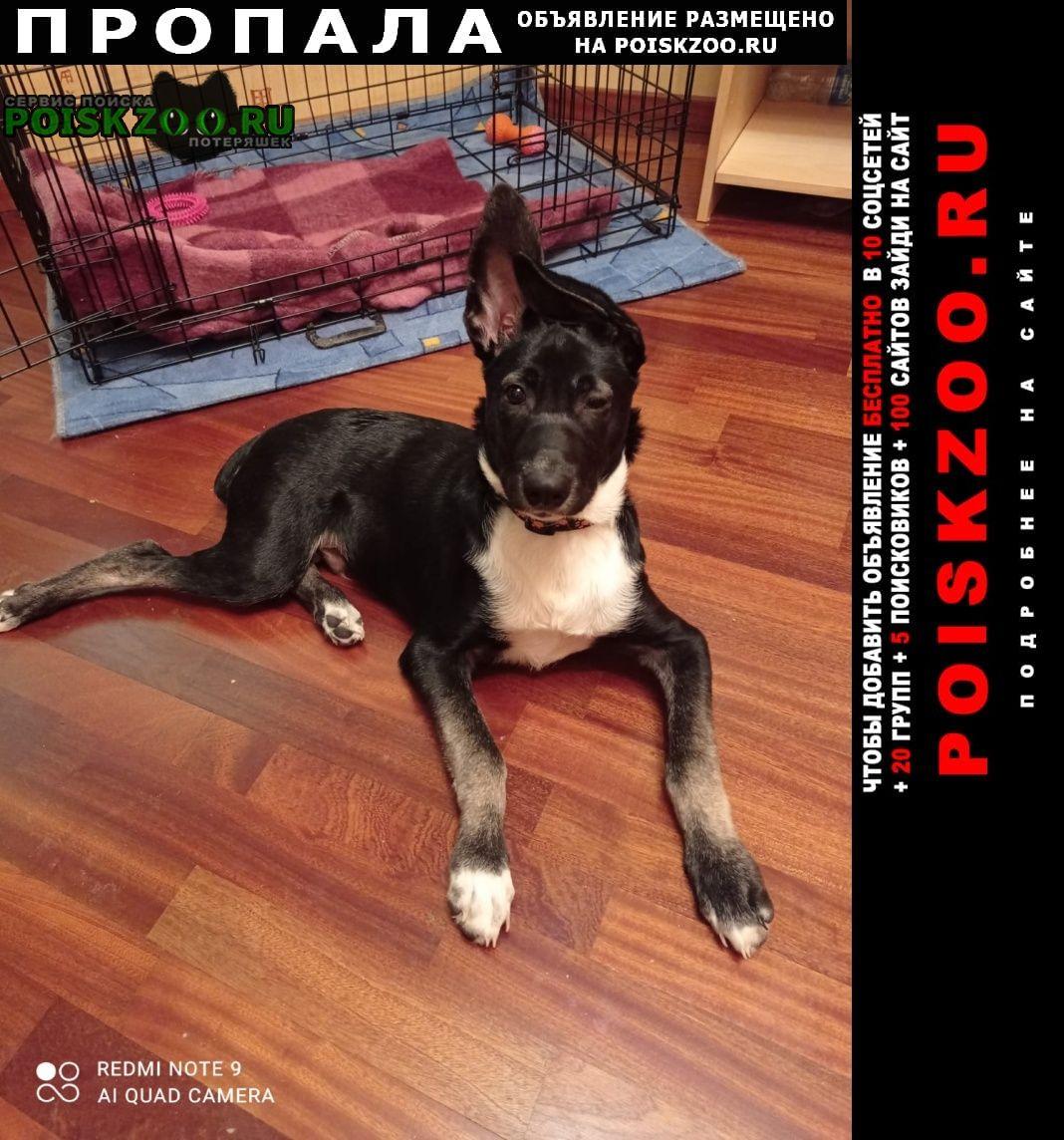 Пропала собака кобель убежала собака Москва