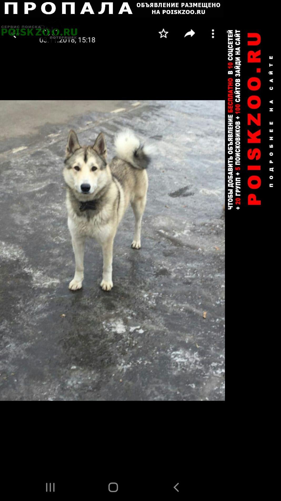 Пропала собака кобель Щербинка