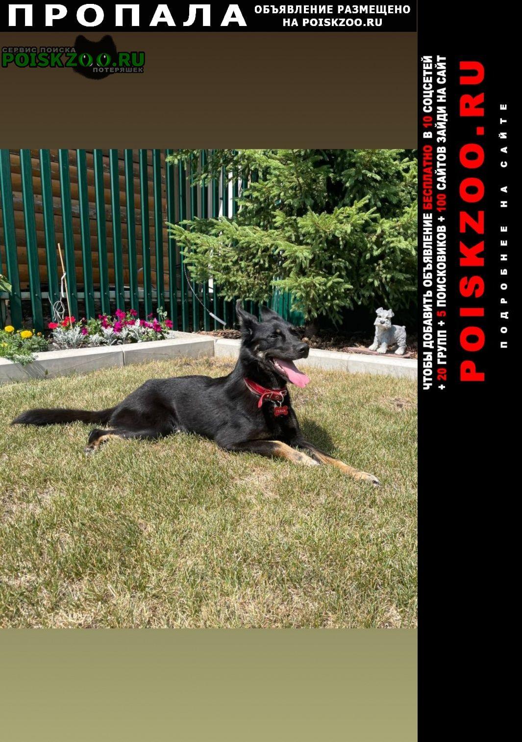 Пропала собака просьба вернуть за вознаграждение Раевский
