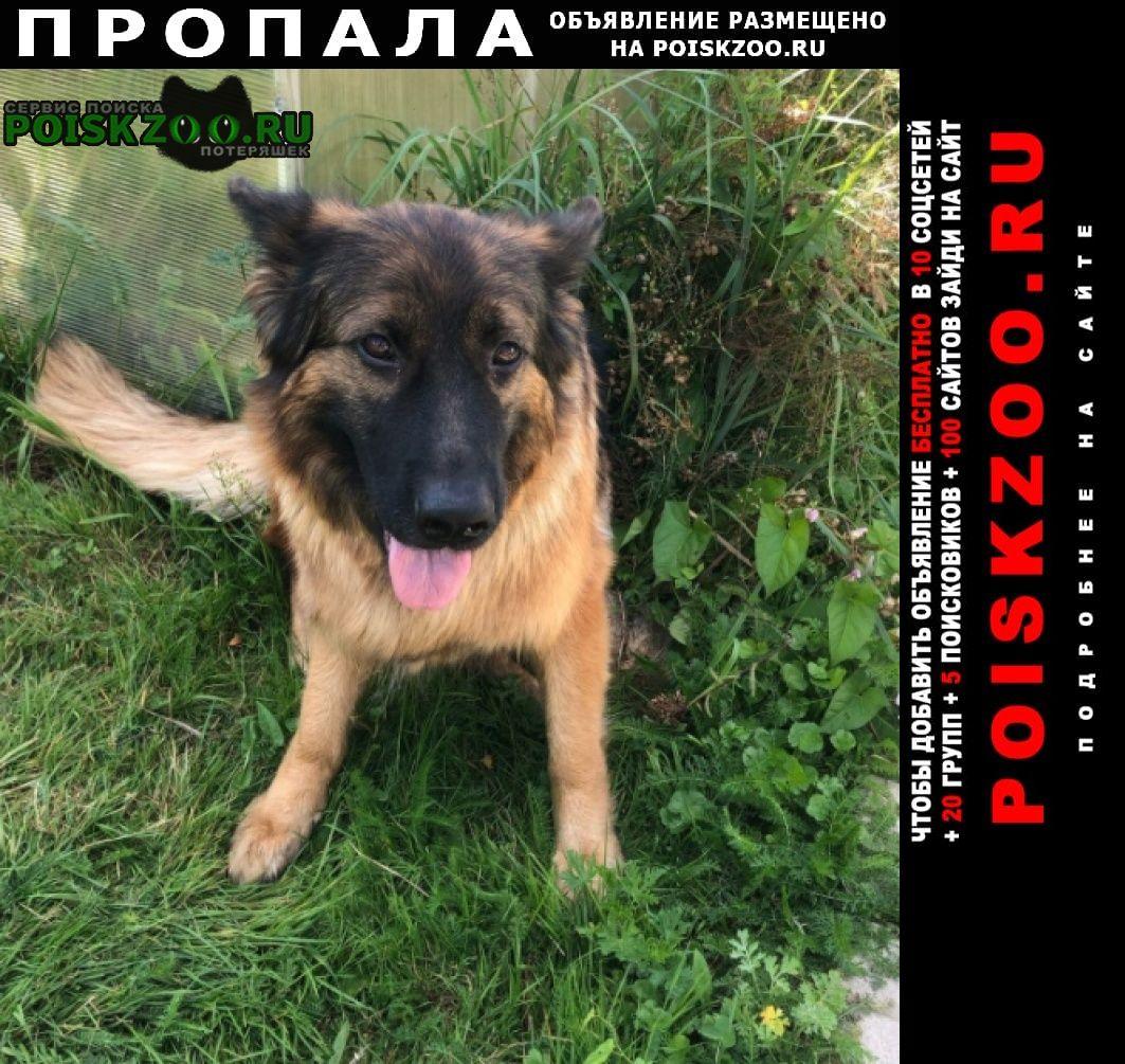 Пропала собака немецкая овчарка Электрогорск