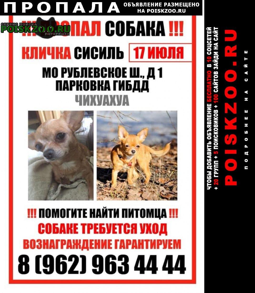 Пропала собака чахуа-хуа Москва