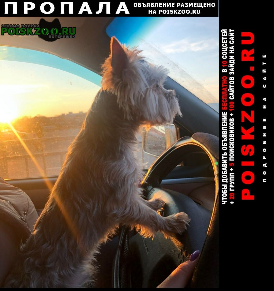 Пропала собака кобель Белгород