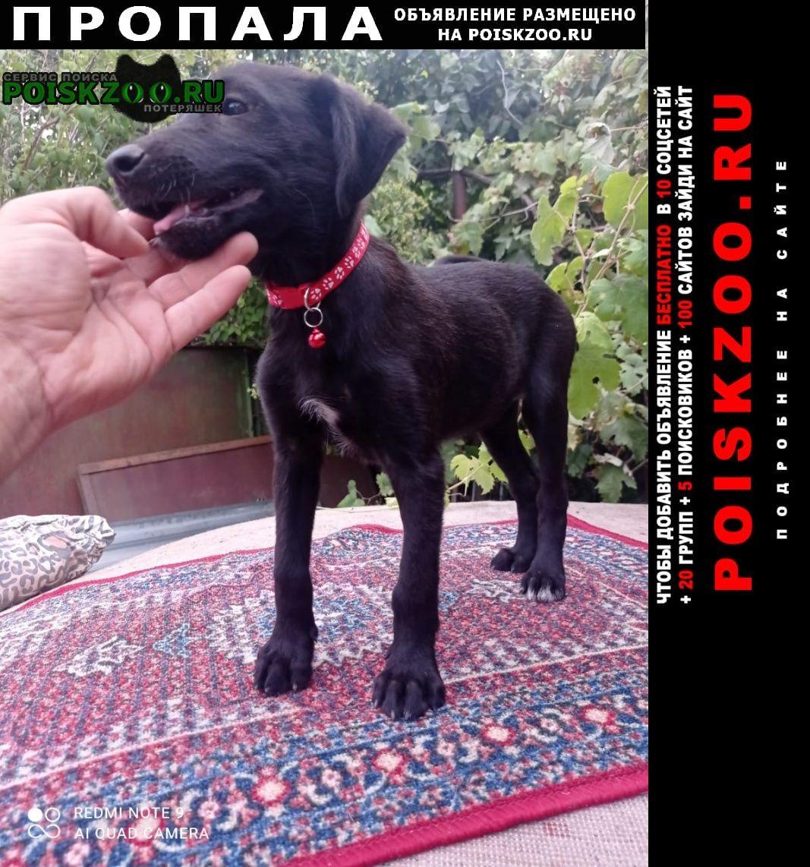 Пропала собака помогите найти Афипский