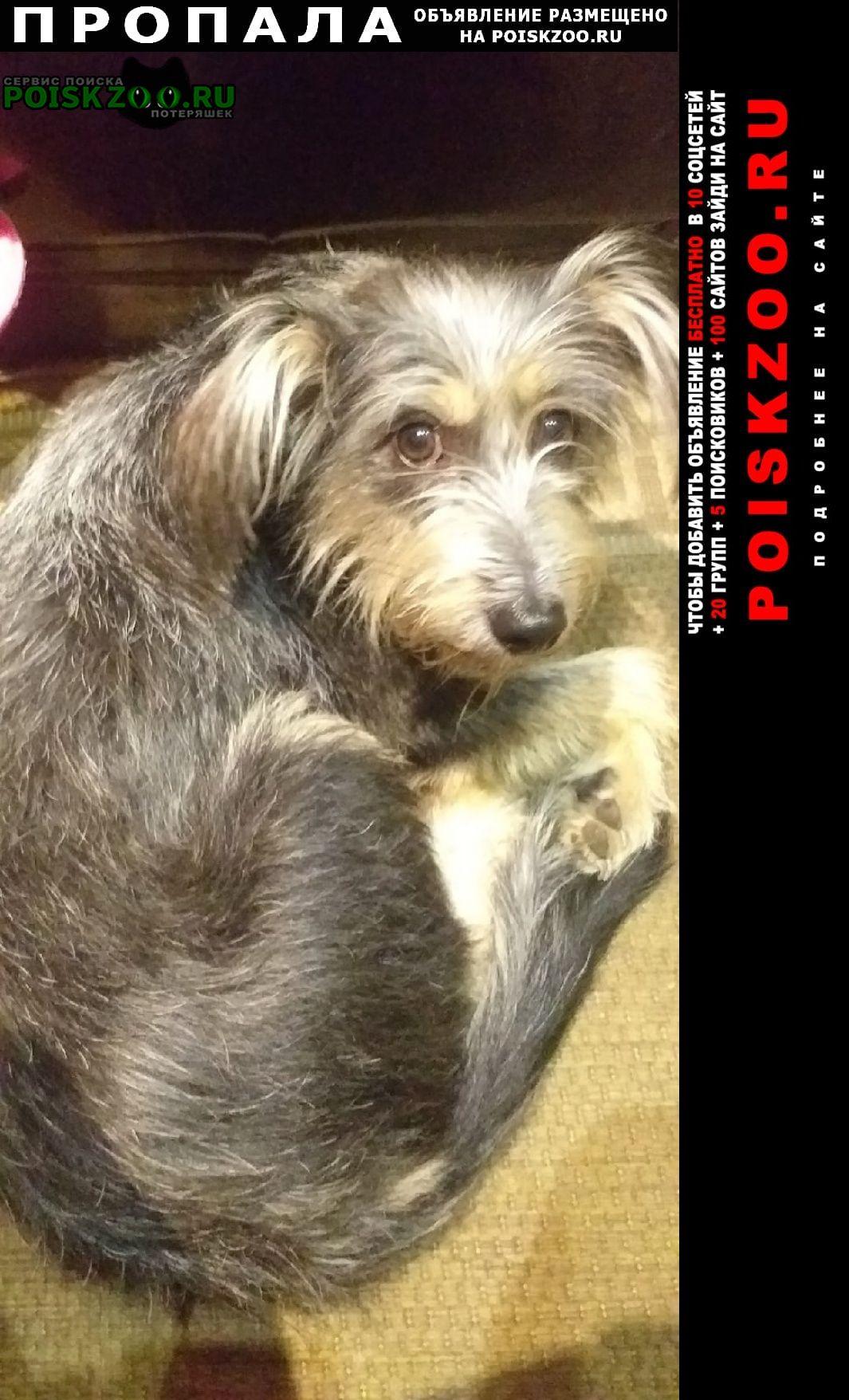 Пропала собака Кострома