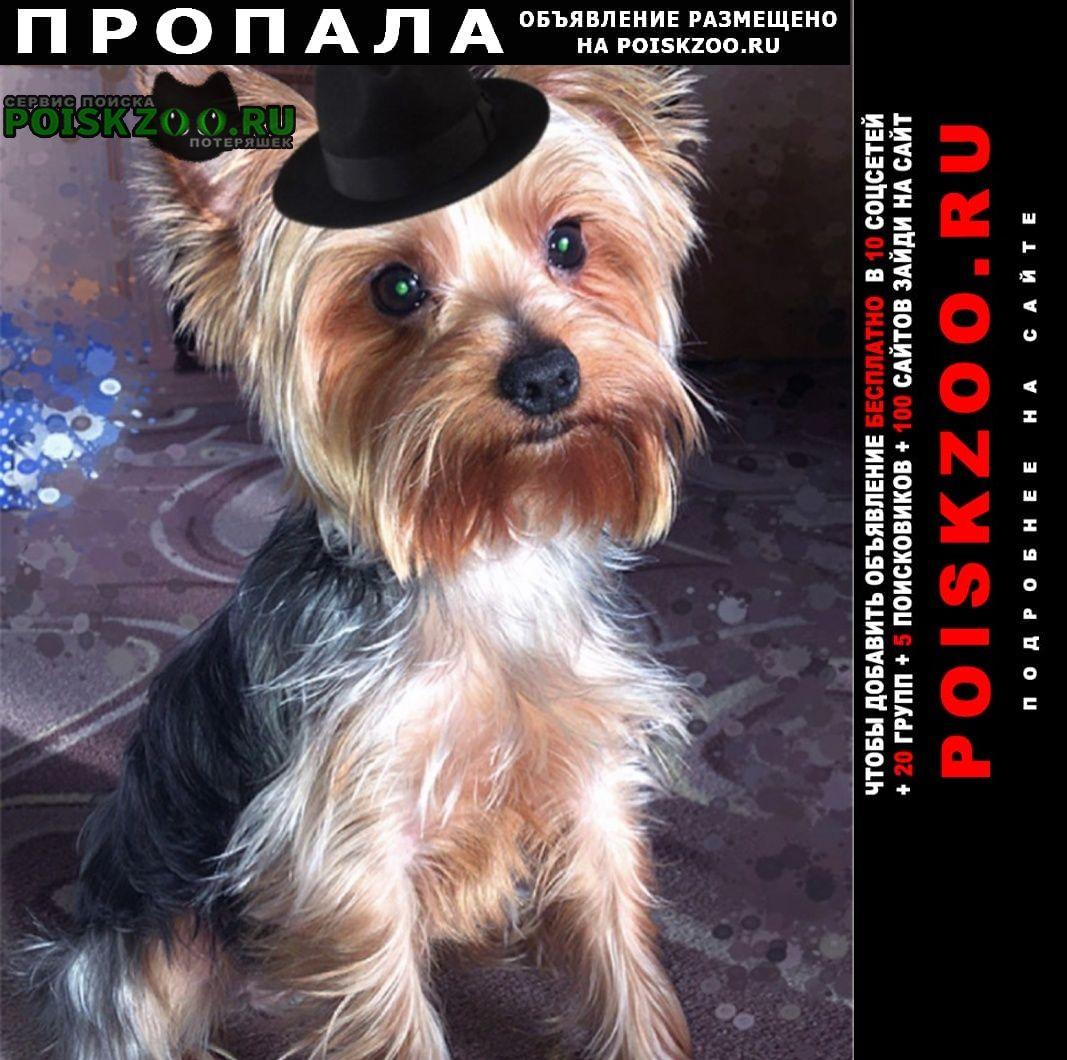 Пропала собака кобель йорк, три года Москва