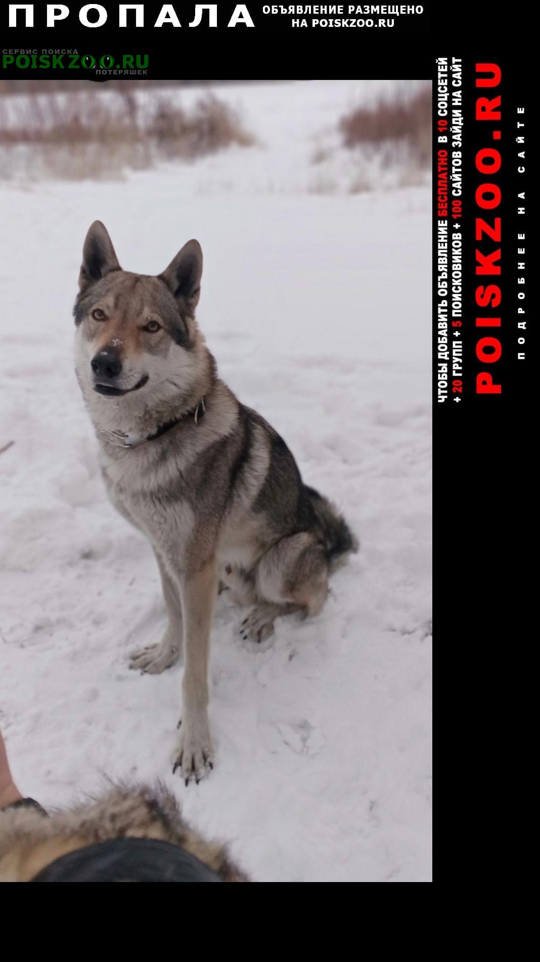 Пропала собака кобель Оренбург