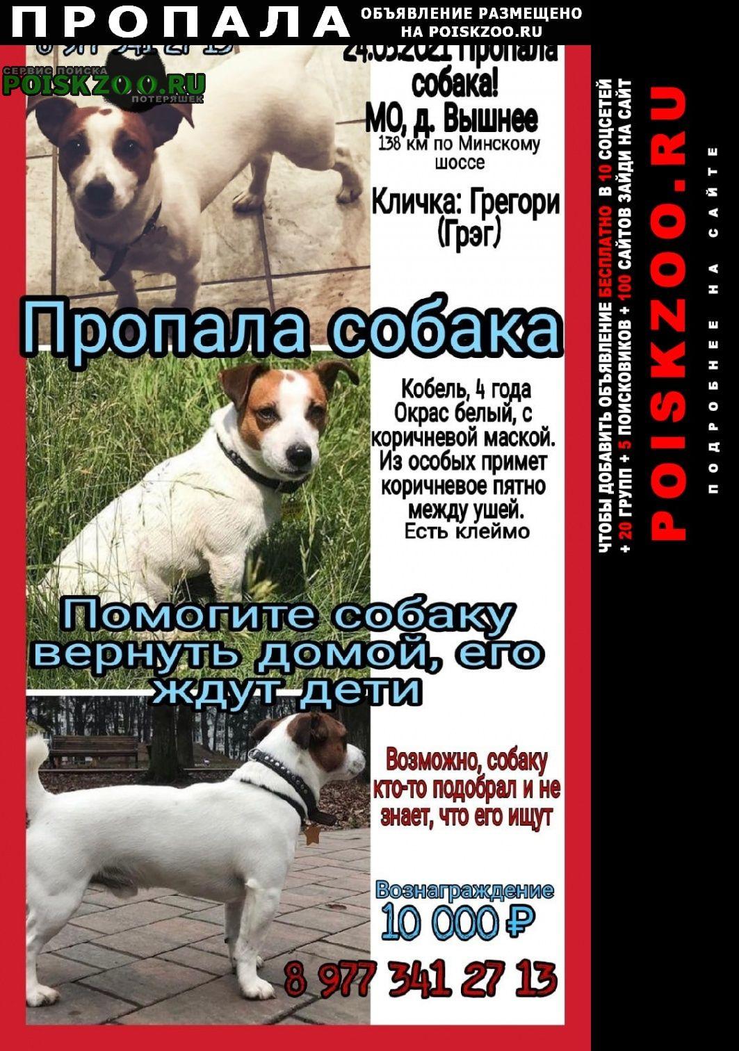 Пропала собака кобель джек рассел терьер Можайск