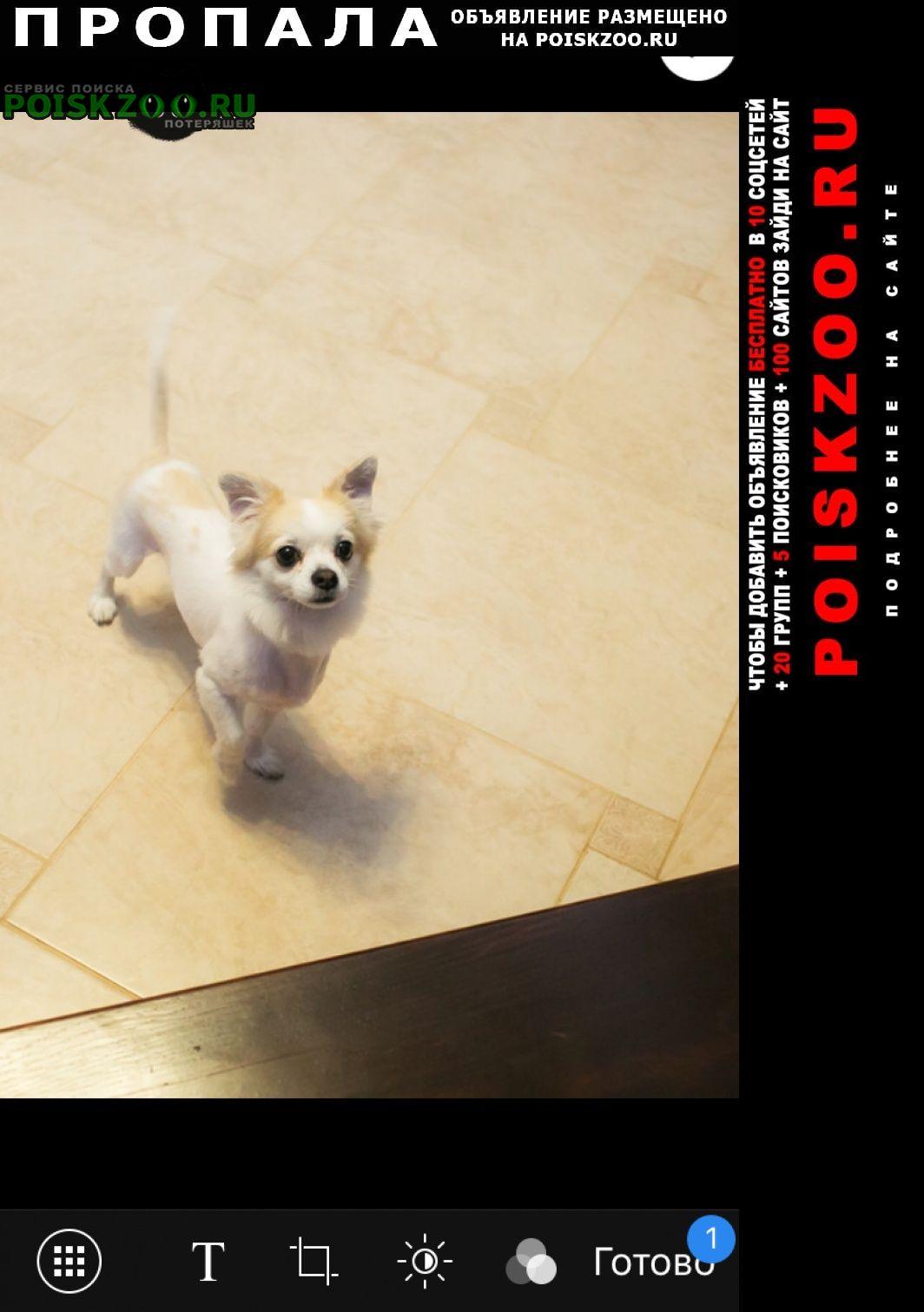 Пропала собака кобель Зеленогорск (Красноярский край)