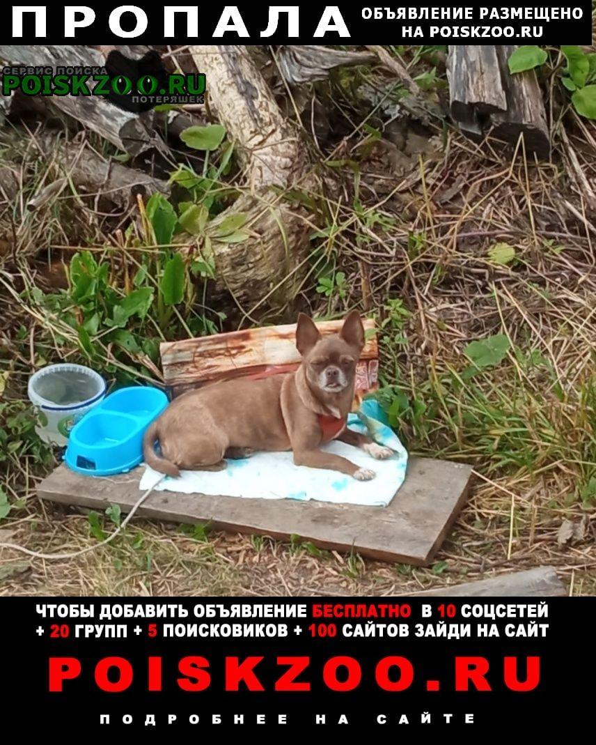 Пропала собака помогите найти собаку Икша
