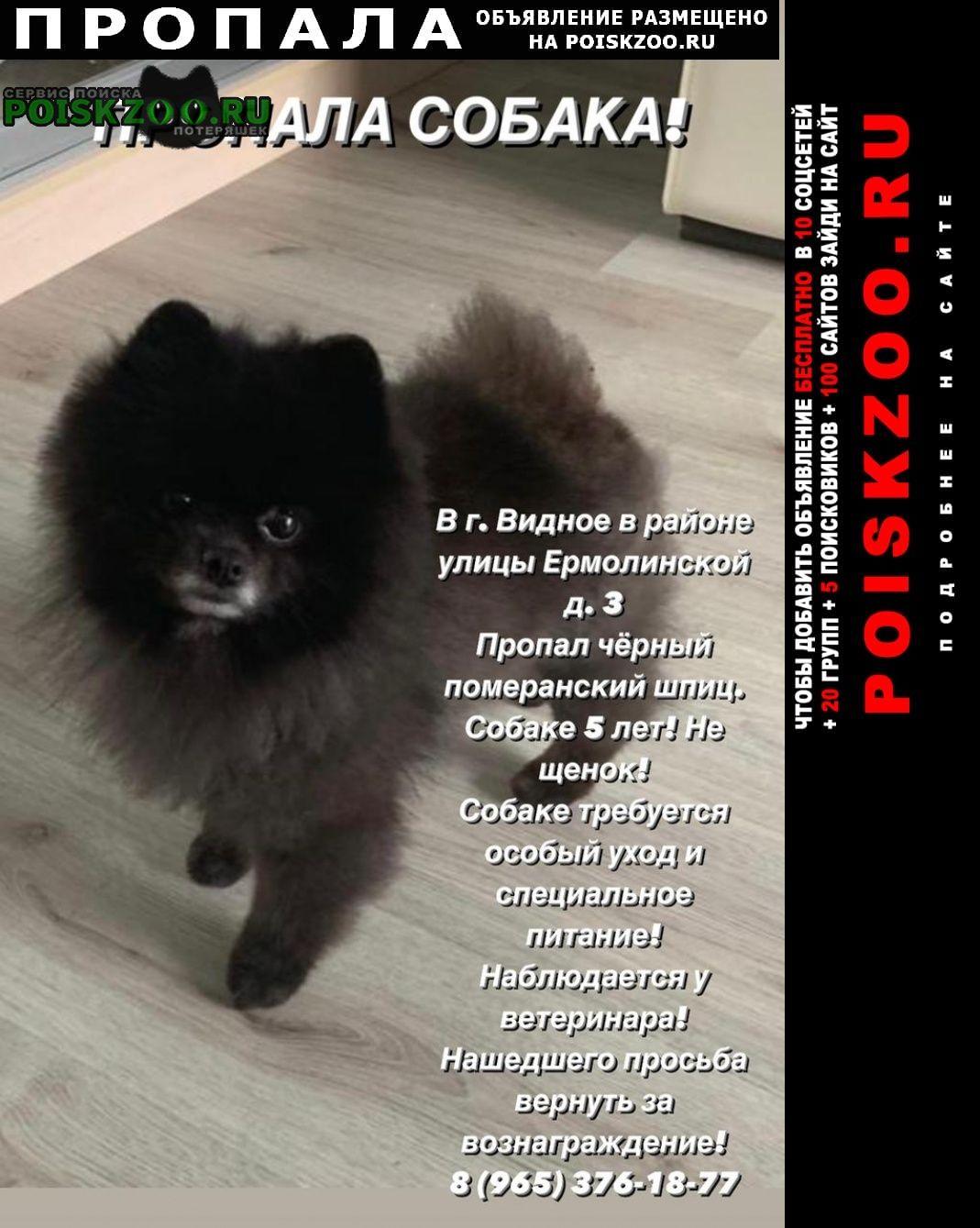 Пропала собака кобель шпиц померанский чёрный Видное