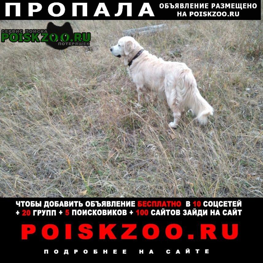 Пропала собака Тольятти