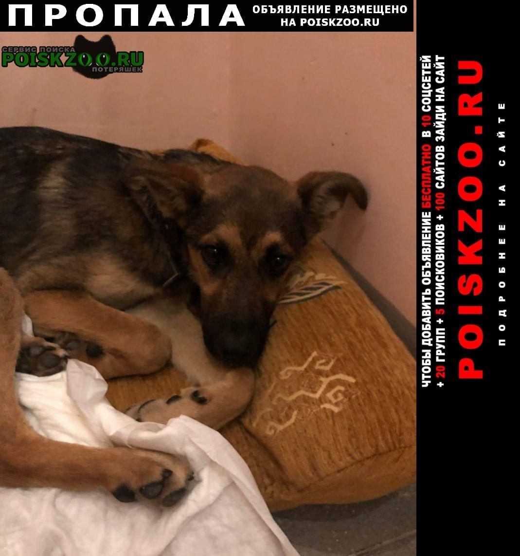 Пропала собака кобель подросток, дворняга Москва