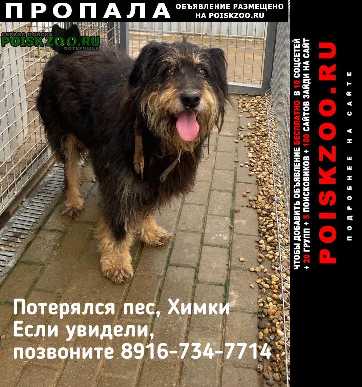 Пропала собака кобель, потерялась собака Химки