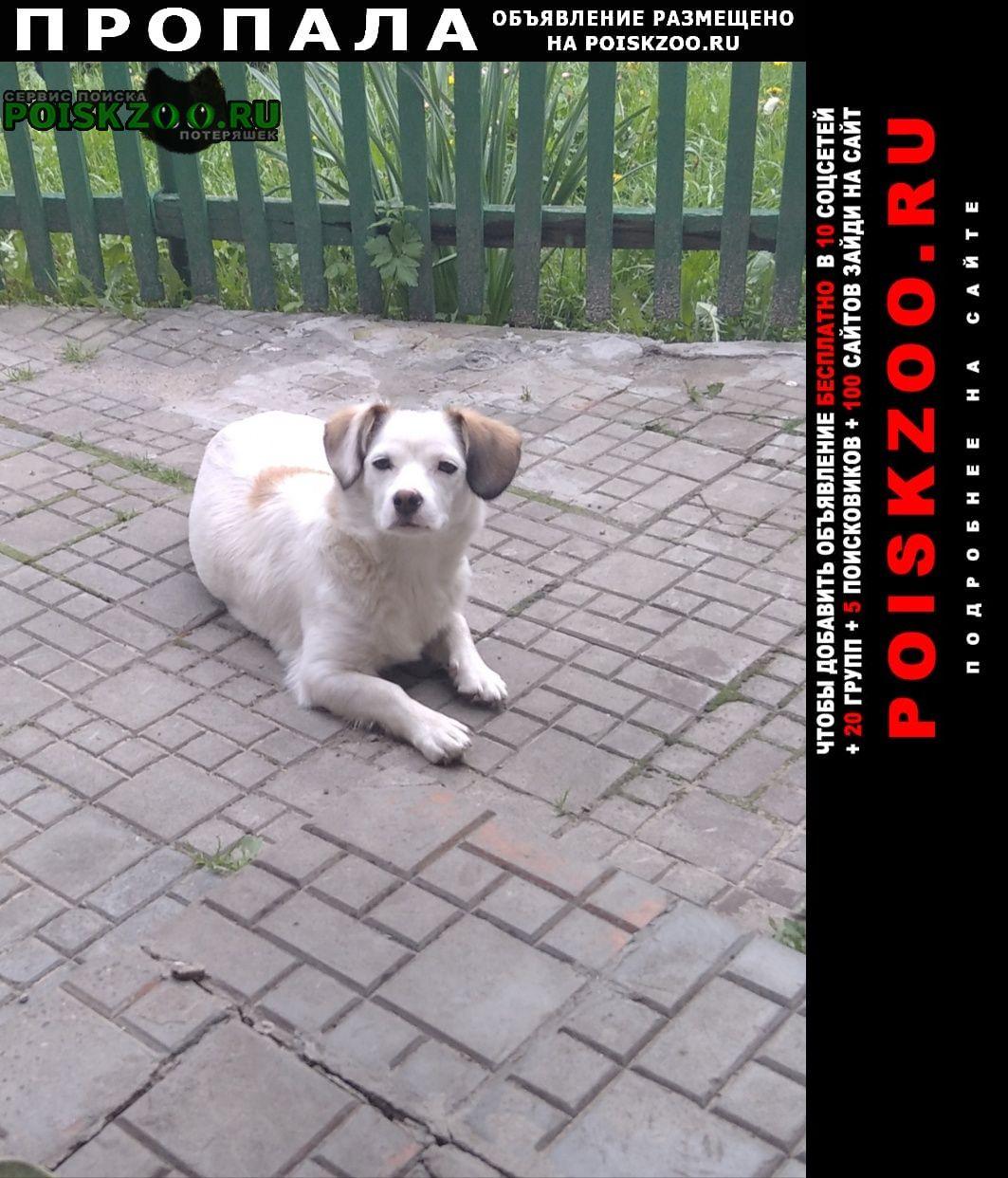 Пропала собака Кобрин