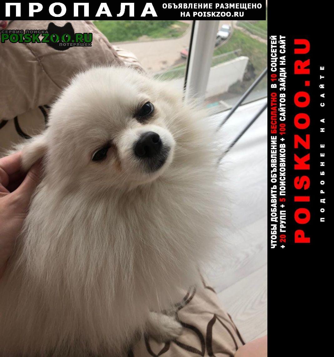 Пропала собака кобель шпиц Красноярск