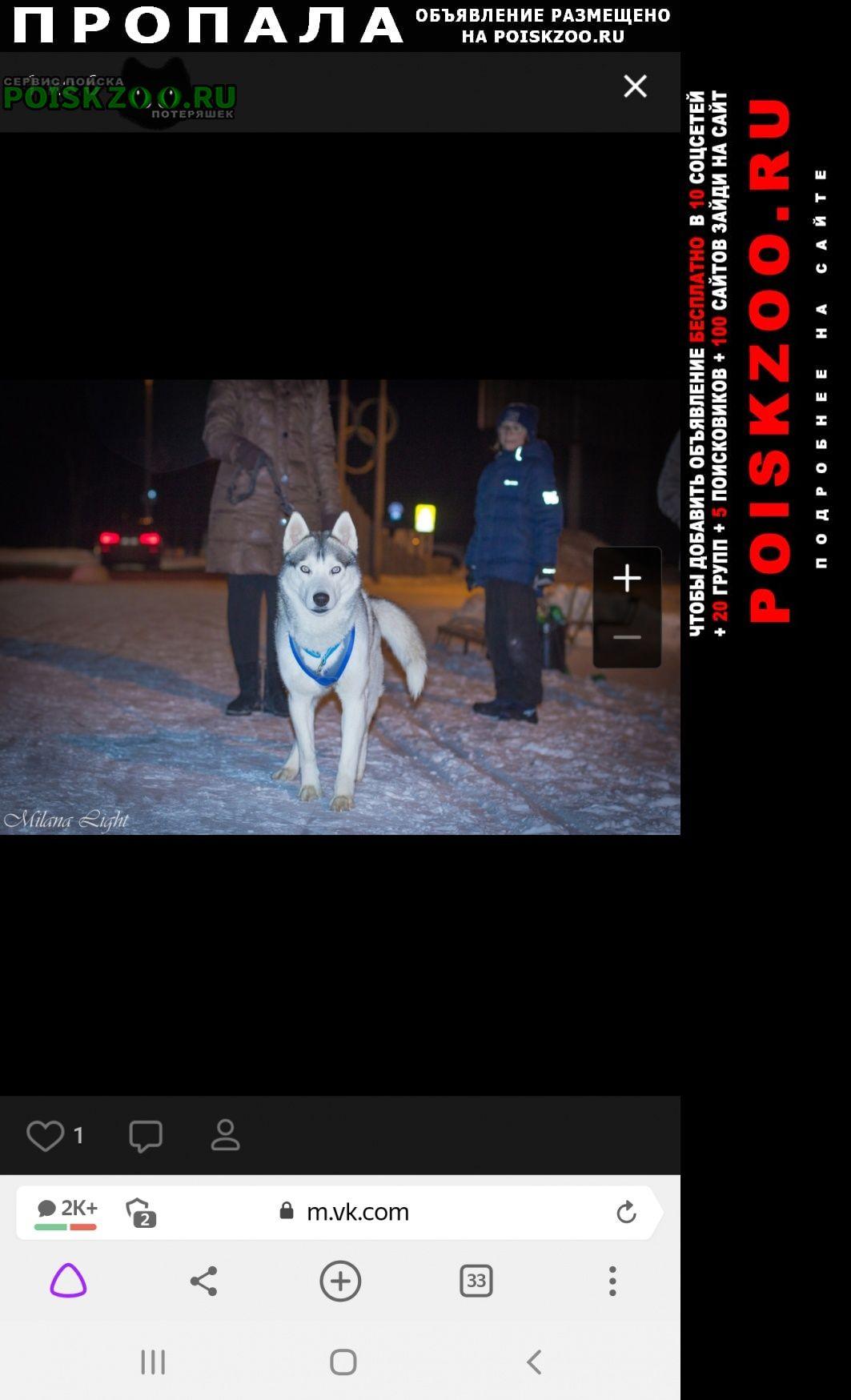 Пропала собака кобель хаски Пенза