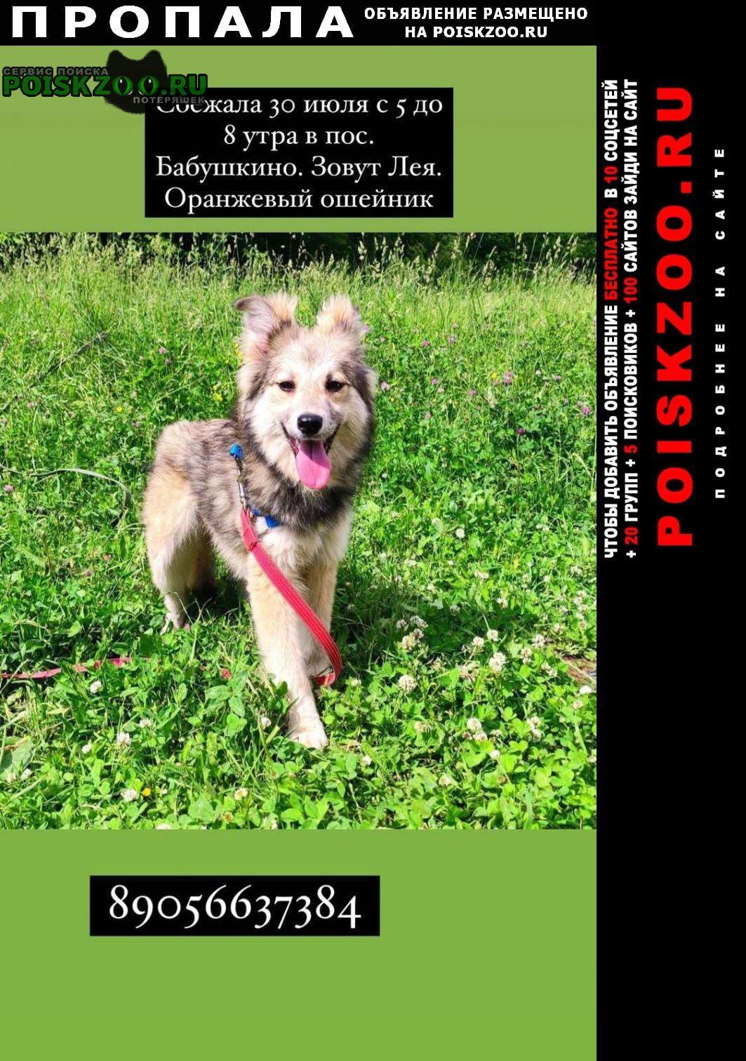 Пропала собака лея потерялась Дзержинск