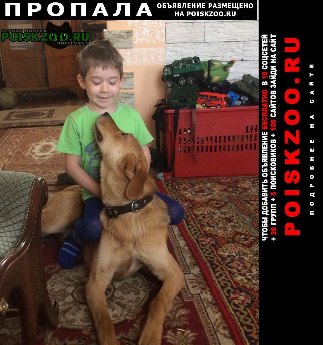 Пропала собака кобель русской пегой гончей Новосибирск