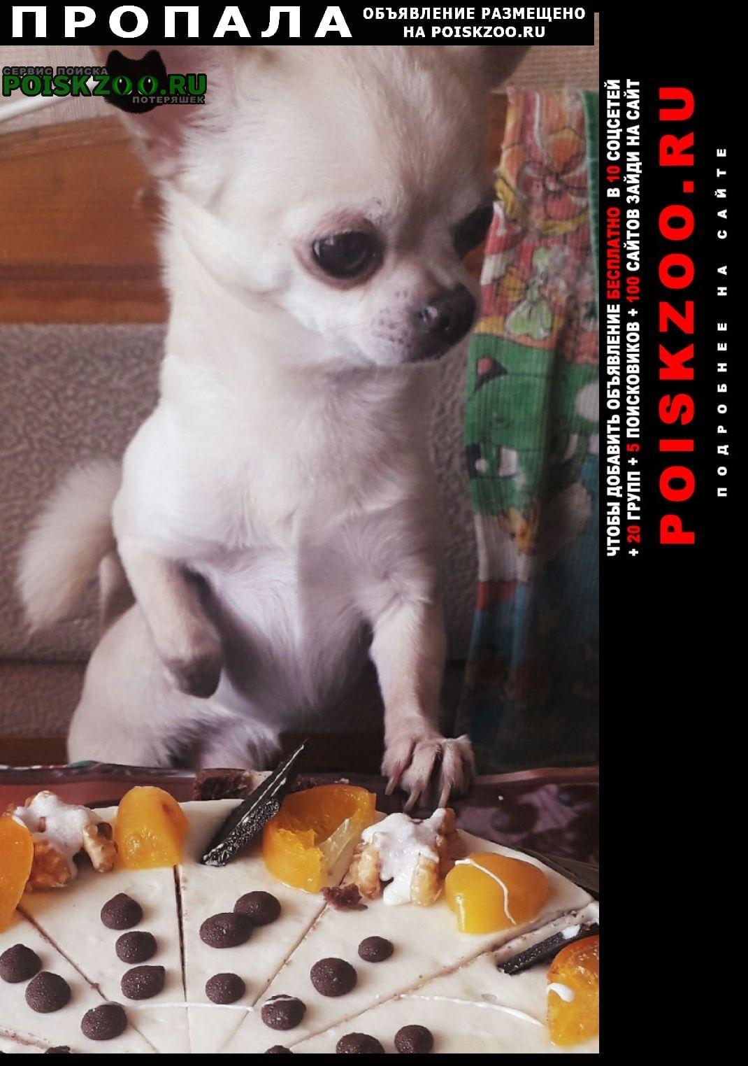 Пропала собака кобель Дружная Горка