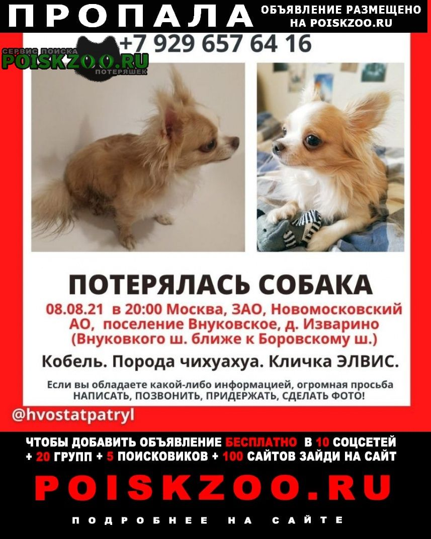 Пропала собака кобель, изварино, марушкино, апрелевка Внуково