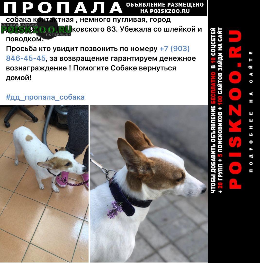 Пропала собака кличка ася Дзержинск