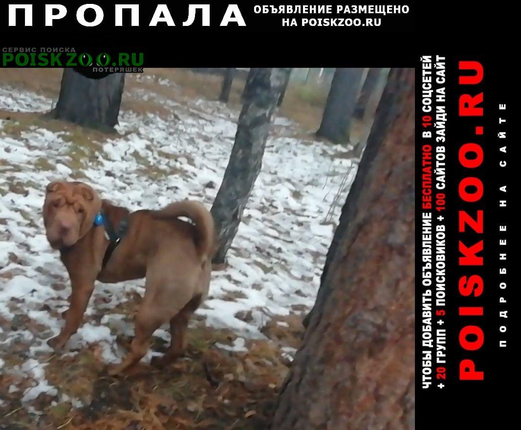 Пропала собака шарпей девочка Шелехов