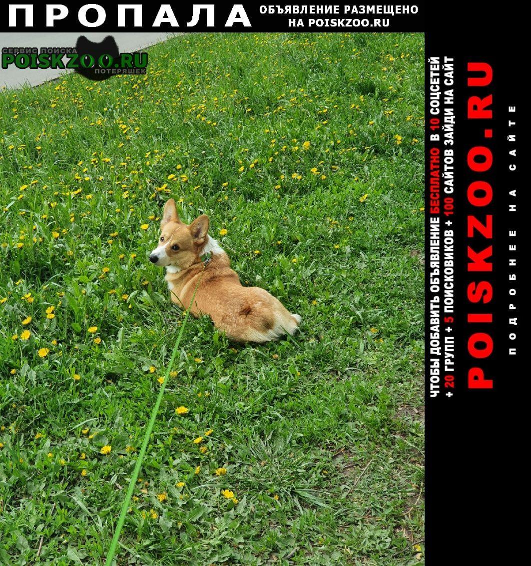 Пропала собака кобель Чехов