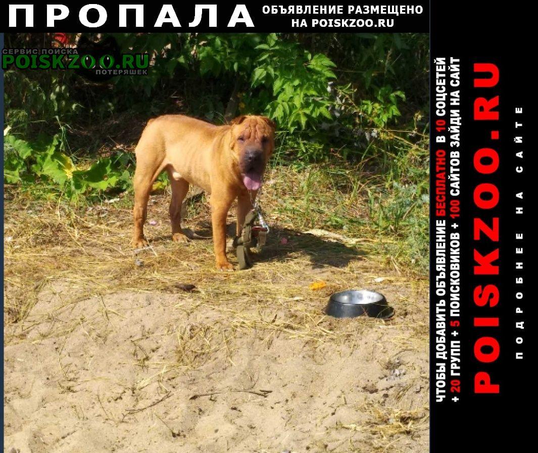 Пропала собака кобель шарпея Челябинск