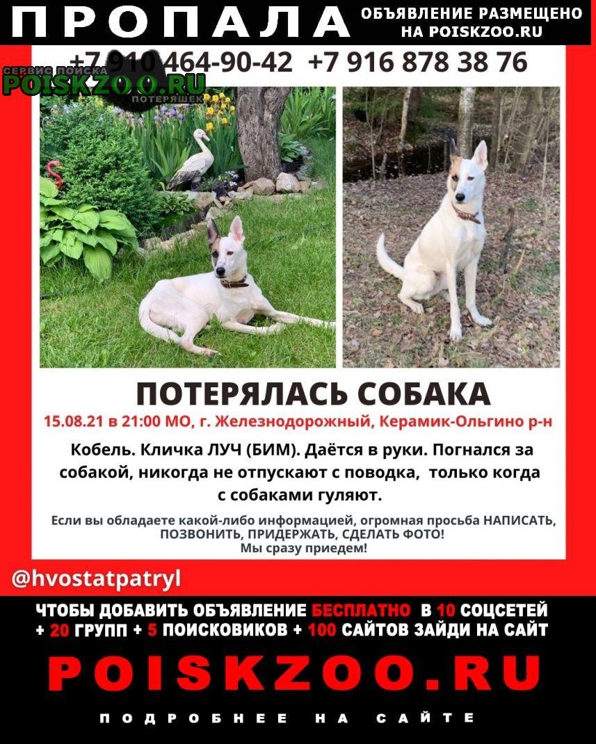 Пропала собака кобель помогите найти друга и члена семьи Железнодорожный (Московск.)