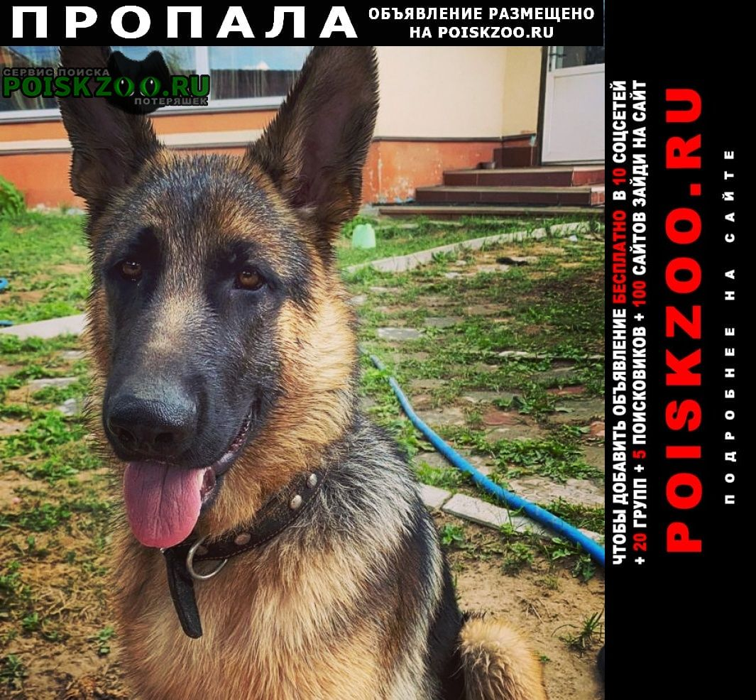 Пропала собака кобель награда 5 000 руб. Москва