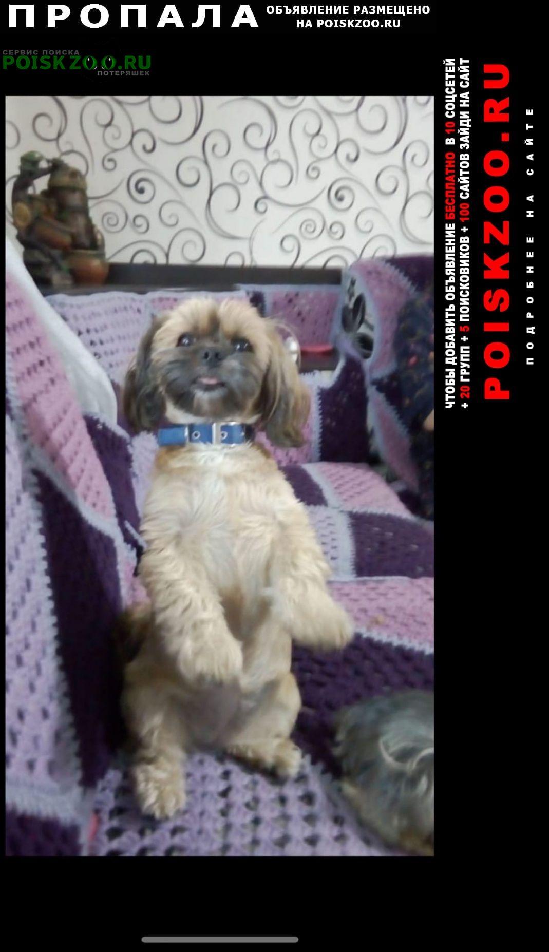 Пропала собака в снт северный электр-ль Электросталь