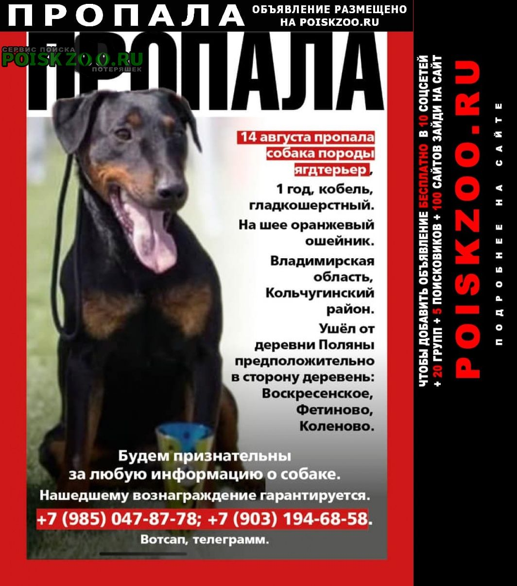Пропала собака кобель помогите найти Киржач