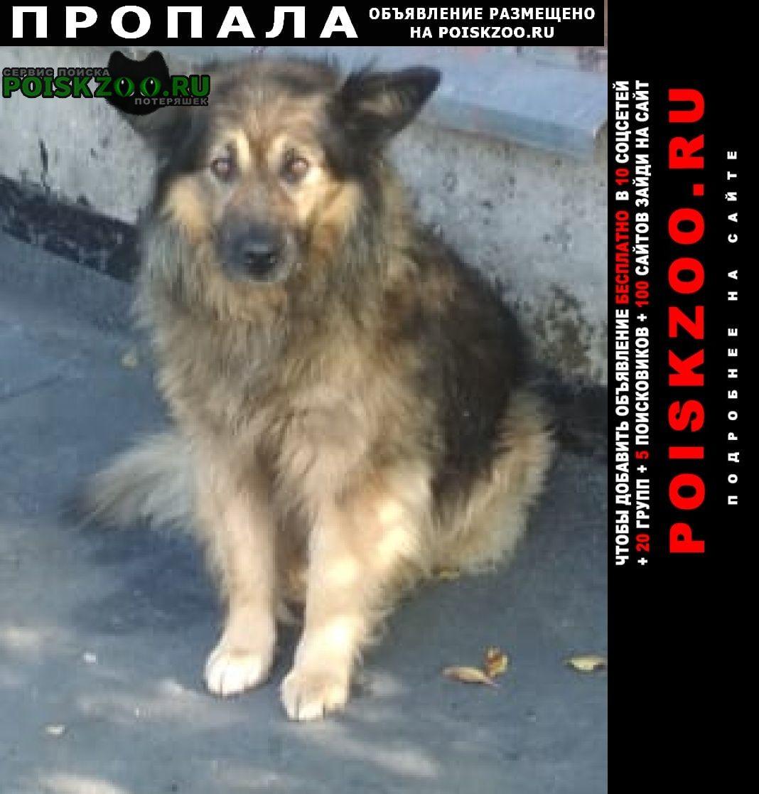 Пропала собака кобель помогите найти собаку Лакинск