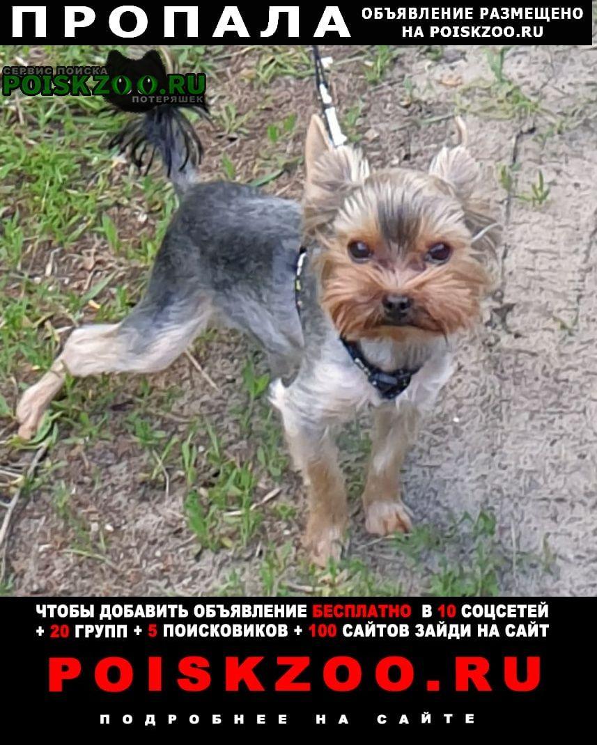 Пропала собака кобель Гомель