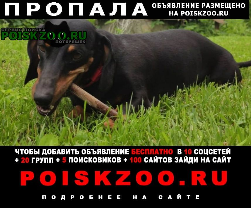 Пропала собака Загорянский