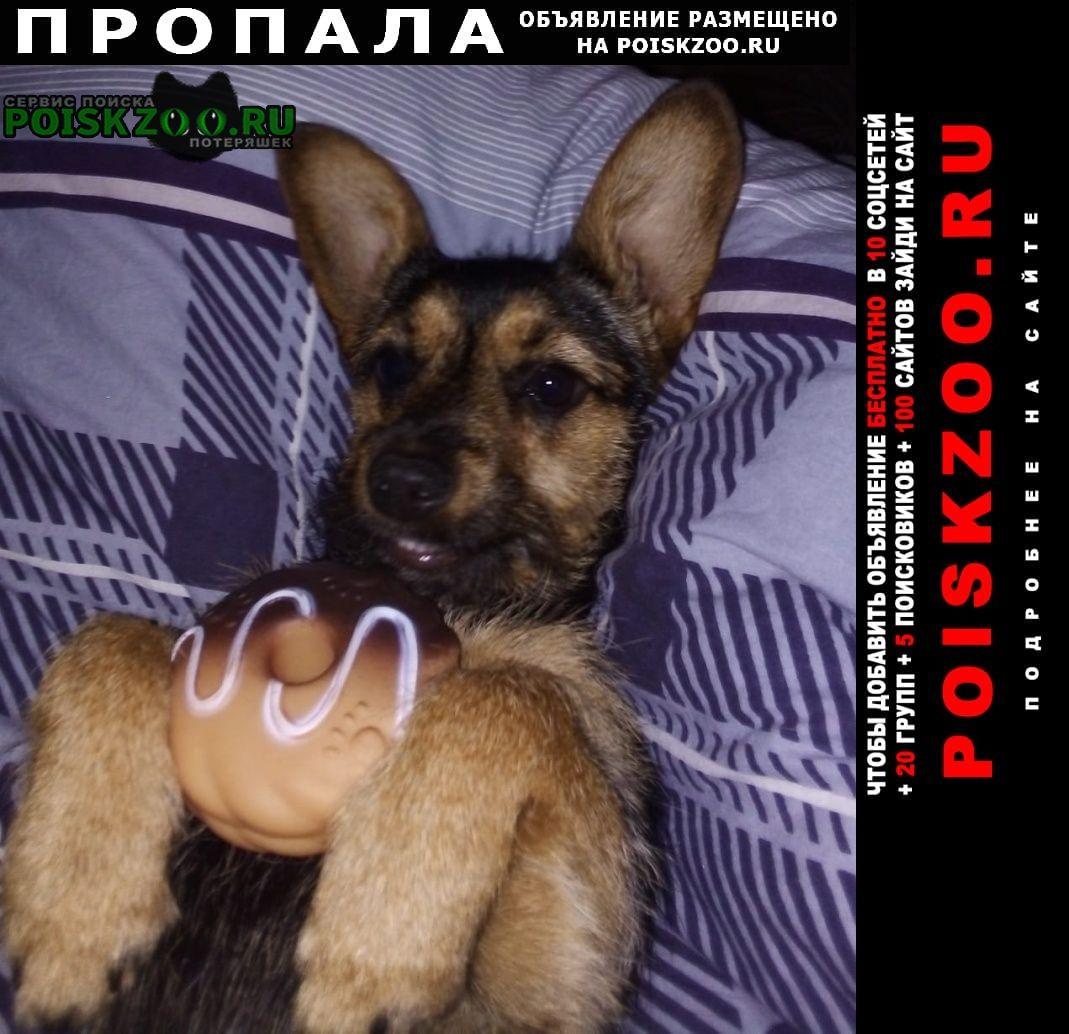 Пропала собака потерялась Михайловск Ставропольский край